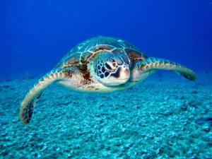 10 best underwater cameras